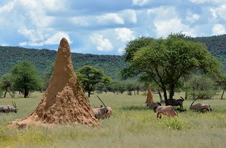 Oryx and Termite mounds - Okonjima Plains Camp, Namibia.