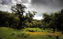 ...el viejo alcornoque (Garciamartín) Tags: árbol bosque alcornoque paisaje parquenatural andalucía españa europa garciamartín nino nubes naturaleza sierradearacena huelva