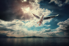 into the blue (Chrisnaton) Tags: seagull lake ocean flying bluesky sun clouds nature bird zugersee