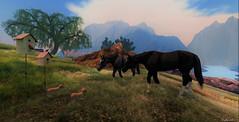 """Hey little buddies"" (Sparkie Cyberstar) Tags: horse puppies puppy animal secondlife virtualworld windlight tint"