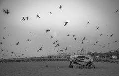 The Birdman (Srini GS) Tags: chennai marina beach sea bayofbengal mychennai boat shores birds