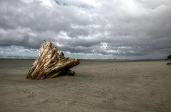 beach hdr (SILBECL) Tags: driftwood olympicnationalpark beach washington absolutelystunningscapes