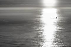 Barco contraluz (Carlos_Silva1) Tags: aguarda atlanticsea atlantico baixomiño barco boat buque carguero cincocomaseis clouds fog galicia laguardia mar monte niebla nikon nubes ocaso reflects reflejos santatecla santatrega sea sol sun sunset transporte transpot españa es