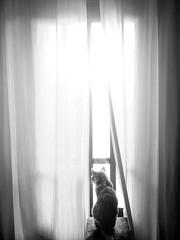 Simba à la fenêtre