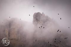 """""""Entre pics et brouillard"""". Vol de chocards - Haute-Savoie, France. (Raphaël Grinevald • Photographe) Tags: raphaelgrinevald reflex rhônealpes nikon d800 nature brouillard brume pic montagne mont sommet alpes alpinisme chocard bird oiseau lpo france french froid falaise sigma 150600 contemporary bargy massif mountains hiking"""