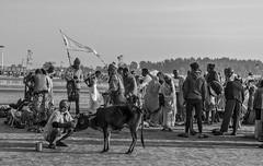 Gathering...My Tryst with Faith...!! (sandy_photo) Tags: gangasagar ganges bayofbengal india bengal beautifulbengal incredibleindia people religion hindu hinduism gathering outdoor