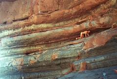 cat (a stage) Tags: cat hannesherbst analog analogue analogphotography a1 astage morocco maroc mountains marokko originalphotography orient rocks wall cliff cliffdiving journey