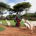 A women pastoralist leads her goat for grazing
