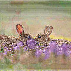 34215605546_ab0c9f0cf7.jpg (amwtony) Tags: heathrowgatwickcarscom instagram european rabbit £european outdoors animals 341051574018ca2f0a50cjpg 3385184536054b44e2366jpg 34105609041101e0bbf78jpg 34236093465ece4972045jpg 34236237805810efdb7b4jpg 3419614267680248d853cjpg 34196281676d5c2e7b90cjpg 333954470949889fbba65jpg 33406211464e6fc7c9ca5jpg nature 341173798413e8066f1c7jpg 338641169005438812ec8jpg 3386445253005c94d116ejpg 34248191735859a1c06e2jpg 334072897046a6774af94jpg 3340746003412140d0f4cjpg 334076251242daaca13cfjpg 34248974795446f4a662ejpg 342492433757270b35db1jpg 334395869135cfb2aa68fjpg 341195643510294a1fdd6jpg 3340897491482d6b22df1jpg 334092727643abea2124djpg 34093767412ae5caf23b3jpg 34210599686cdf6f00124jpg 342109631462ab7800c6ejpg birds 3412116508138d5f44949jpg 33410559234d25f97fbd8jpg 33868460960d9575f1d9bjpg 33442359043f370a56fdbjpg 34252617035298d96dbf3jpg 34095978892bff39c13fajpg 334430316139acb579d5fjpg 3409638283266c3671e67jpg 34253425305a1afdc17d7jpg 34213291596214a49bf76jpg 334440434836274ac3bd9jpg 33870693860d5023b5c2djpg 334445965833c693f66f9jpg 338710847608eff10a7a5jpg 33413610914ac11ea8c69jpg 3425499922591880a9fbcjpg 33414065624002f8682fdjpg 3421517967627fa10e582jpg