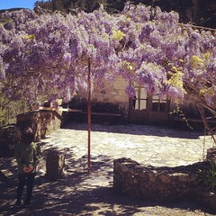#france #2017 #ardeche #fleurs #wisteria #flower (Yuko K.) Tags: instagramapp square squareformat iphoneography uploaded:by=instagram rise