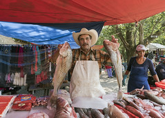 Fresh fish for sale (tmeallen) Tags: fishsales freshwaterfish fishvendor man holdingfishbygills fishstand weeklymarket ajijicmarket jalisco ajijictown lakechapala mexico
