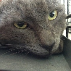 Hudson - 3 year old neutered male