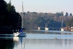 Voiliers sur la rivière d'Auray, au niveau de la commune du Bono (Bretagne, Morbihan, France) (bobroy20) Tags: lebono ria auray bretagne morbihan voilier bateau navire nature paysage rivière