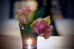 Quelques roses ... ( P-A) Tags: roses fleurs verre bistro tables rencontres apéro provence arles visiteurs touristesrencontres photographes été chaleurfraicheur naturemorte naturevivante couleurs parfum photos simpa© ~~atmosphere~~