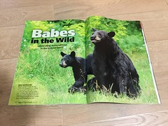 Our Canada (Megan Lorenz) Tags: moreofourcanada ourcanada magazine may2017 may 2017 cover issue wildlifephotography photography publication published ontario canada mlorenz meganlorenz fox redfox foxkit bear blackbear bearcub sow female
