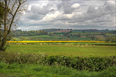 Landscape in cow parsley time, near Brailes, Warwickshire, 28 April 2017 (alanhitchcock49) Tags: brailes villages warwickshire high spring 28 april 2017 landscapes cotswolds