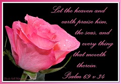 Praise Him (Glenda Hall) Tags: pink light inspiration black flower water rose blackbackground canon eos droplets petals drops spring god text details flash may gimp christian frame raindrops bible northernireland editing bouquet psalms waterdrops scripture praise verse tyrone bibleverse 2013 60d praisehim bibletext glendahall