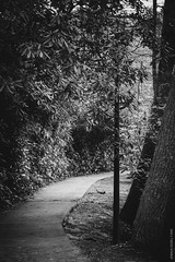 Down the Lane (Joshua | Ezzell) Tags: blackandwhite forest lamppost walkway lane rhododendron canopy blowingrock