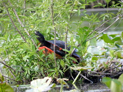 Painted Turtle (Christine_Ray) Tags: park county new pine state reserve national jersey pinelands salem barrens parvin belleplain belleplaincapemayandparvin capemayandparvin