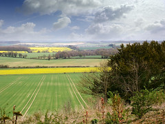Photo of Rural View from Danebury Hill