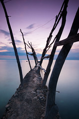 Wooden piles in Savudrija (Alja Vidmar | ADesign Studio) Tags: wood longexposure sunset seascape clouds croatia pole filter bluehour adriaticsea cokin gnd savudrija nd4x