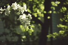 So if you got a light, hold it high for me (betsyblue) Tags: light sun tree dark blossom bokeh blossoms