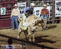 Hamel Rodeo 2013 (andrew_chow67) Tags: barrel bull racing riding rodeo calf roping hamel