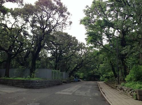 2013.7上野公園3