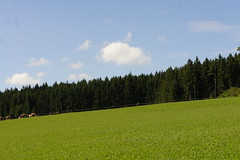 Schwarzwald 2013 (Mattia Moretti) Tags: schwarzwald 2013