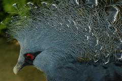 11082013-DSC07843 (jorgeaq) Tags: birds sony aves sonyalpha700 minoltaaf5035macro
