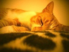 sleepy cat Dikkie Dik (SabineBB) Tags: cat sleepy