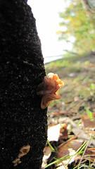 (le d u m) Tags: autumn wild white nature forest table mushrooms village basket mush knife fungus swamp dacha darner boletus