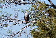 Kruger National Park (OurPhotoWork) Tags: travel southafrica wildlife safari krugernationalpark kruger gamedrive africansafari africasafari krugernp travelplanet ourphotowork sa2013