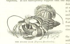 Anglų lietuvių žodynas. Žodis decapod crustacean reiškia dešimtkojai vėžiagyvių lietuviškai.