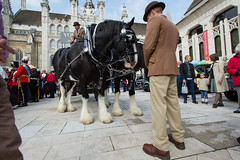 00314_No.233 (Steve Lippitt) Tags: horses horse london hat fashion animal animals unitedkingdom wildlife transport hats cap transportation bowlerhat beast cart creatures creature livestock mammals beasts lid zoology bridle dray landtransportation equuscaballus oddtoedungulates geo:country=unitedkingdom geo:city=london undomesticatedanimals harnesshorses ridingequipment camera:make=nikoncorporation exif:make=nikoncorporation geostate exif:lens=170350mmf28 exif:aperture=ƒ63 manmadeobjets exif:model=nikond4 camera:model=nikond4 geo:lon=0091993333333333 geo:lat=51515426666667 exif:isospeed=100 exif:focallength=17mm geo:location=theguildhallyardec22ej