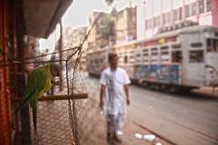 Cry freedom (Rajib Singha) Tags: street city travel india bird interesting cage explore westbengal canoneos5d serachthebest flickriver afsnikkor2870mmf28ed kolkatsa
