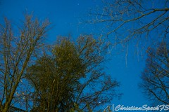 Trees and Stars (christian speck) Tags: trees sky night 35mm stars schweiz switzerland suisse sony lausanne ciel arbres nightsky nuit etoiles rx1