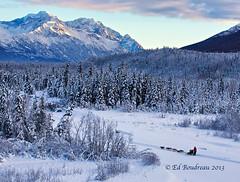 Long Haul (Exlpore) (Ed Boudreau) Tags: winter dog snow dogs alaska eagleriver snowcoveredtrees frozenriver dogsled winterscene eagleriveralaska alaskamountains alaskawinter