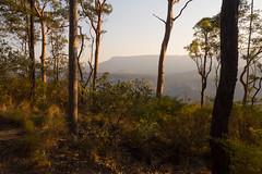 qld trip dec 2013 - 210612 - carnarvon gorge (liam.jon_d) Tags: landscape track australian australia trail qld queensland subtropical subtropics carnarvongorge greatdividingrange billdoyle carnarvonnationalpark boolimba boolimbabluff qldtrip2013 queenslandtrip2013 carnarvongorgesection carnarvonsection
