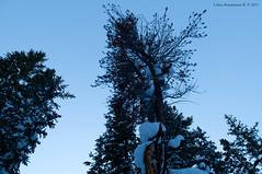 Nieve en rboles. (Magic life gallery) Tags: snowintrees nieveenrboles tree trees rbol arbol rboles snow winter invierno nieve nature naturaleza carlosbustamanterestrepo carlosbustamante fuchalesphotography carlosbustamantecartagena