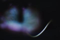 (HANAZONO) Tags: light shadow color art japan canon eos leaf aperture hanazono open bokeh tube 85mm illusion 1d l extension wildflower ef f12 mark3 ef85 ef12 f12l ef85mmf12liiusm