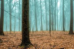 Frigid Forest
