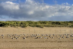 Seagulls on the beach (Lovando) Tags: seagulls beach netherlands strand den nederland hague haag the kijkduin zeemeeuwen {vision}:{outdoor}=099 {vision}:{beach}=0784 {vision}:{mountain}=0809 {vision}:{sky}=0987 {vision}:{clouds}=0979 {vision}:{ocean}=0772
