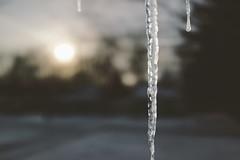 Ice (John Richards1979) Tags: zeiss ocf rx1 sb700