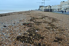 Little beach combers (Lord Cogsby) Tags: worthing after storms littlebeachcombers