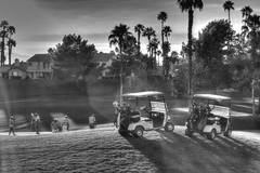 Golfing b&w hdr (Steve Boer) Tags: california blackandwhite bw tree green canon golf 50mm blackwhite desert palm course golfing coachella cart hdr 60d