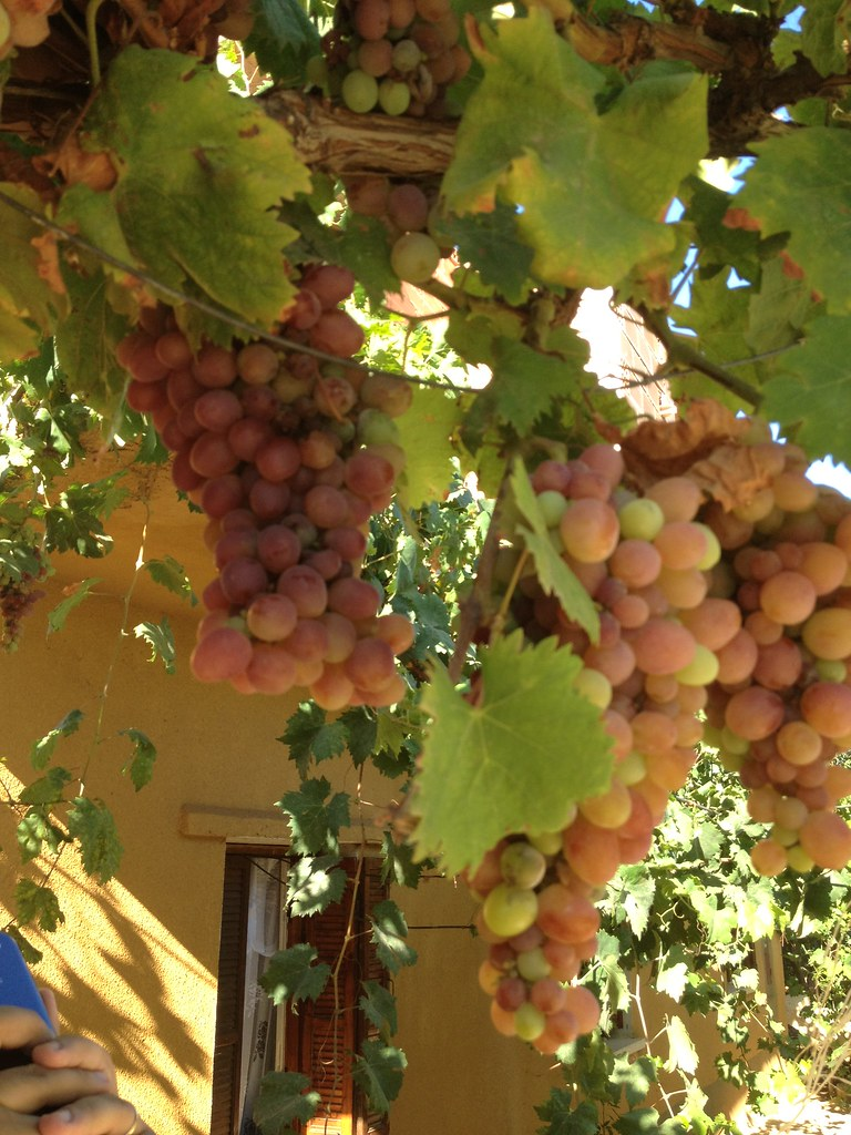 The World\'s Best Photos of arab and grapes - Flickr Hive Mind