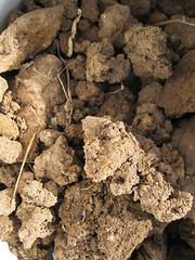 Subsoil_4630274937_l
