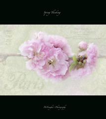 Spring Thinking (DeVaughnSquire) Tags: pink flowers trees spring warm text textures blooms wishing waitingforspring