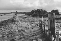 Devon in Black & White (myerslaura) Tags: uk winter england cold beach wet weather countryside seaside sand britain dunes south devon marsh devonshire